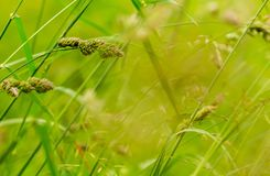 Grass green seeds sunny background plants Stock Photos