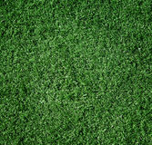 The grass is green, small, close-up. Stock Images