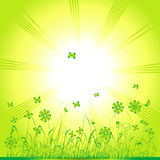 Grass green, summer background Stock Image