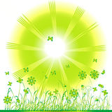 Grass green, summer background Stock Images