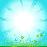Grass green, summer background Royalty Free Stock Photos
