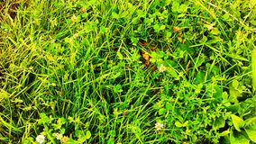 Grass. Green summer sun Royalty Free Stock Photography