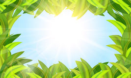The grass is green and the sun in the blue sky Royalty Free Stock Images