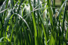 Grass. Green grass on a sunny day stock photo