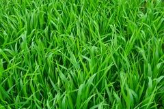 Grass. The green grass texture background Stock Photos
