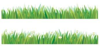 grass green vector 免版税库存图片