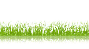 grass green vector 图库摄影