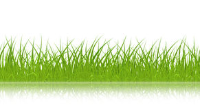 grass green vector 免版税图库摄影