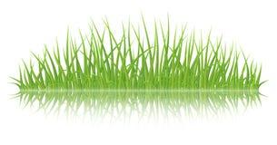grass green vector 库存照片