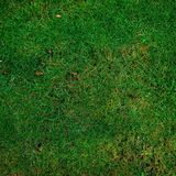 Grass, Green, Vegetation, Ecosystem Stock Photography
