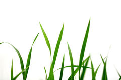 Grass green on a white Stock Image