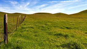 Grass in green only in the winter. Panoramic view of a pasture at the Rush Ranch Open Space, Fairfield, California, USA, featuring the green, invasive grass that Stock Photography