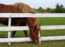 The grass is always greener Royalty Free Stock Photos