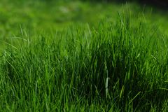 Grass is Greener Royalty Free Stock Images