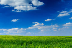 The  grass is always greener. Field with green grass with blue sky and puffy white clouds as background Royalty Free Stock Photo