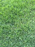 The grass is always greener in Florida 2. Healthy green grass Stock Image