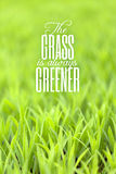 Grass is Always Greener Quote. Green grass with typography quote about the grass always being greener on the other side with copy space Stock Images