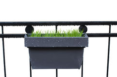 Grass in grey  pot Royalty Free Stock Photography