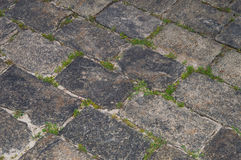 Grass between grey stones. Brick road with grass and moss Royalty Free Stock Image