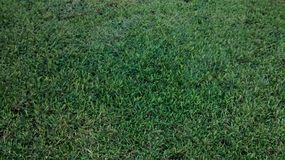 Grass groomed Royalty Free Stock Photos