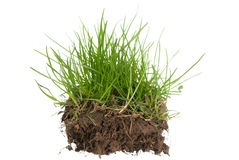 Grass and ground. Green grass with roots on white background