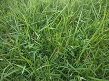 Grass. On ground royalty free stock photo