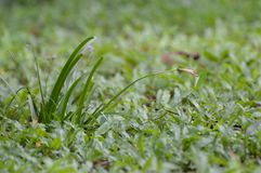 Grass. The ground in the garden Royalty Free Stock Photo