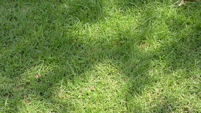grass ground stock video