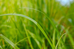 Grass on a ground level Royalty Free Stock Photo