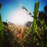 Grass. A ground view of a filed of grass with the sun shining Stock Photo
