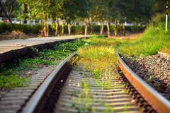 Grass grow alongside railroad while have no trains in evening li. Ght royalty free stock images