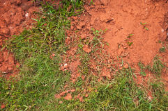 Grass grow in red clay Stock Image