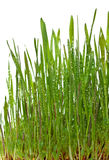 Grass growing Royalty Free Stock Photography