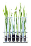 Grass growing Royalty Free Stock Photos