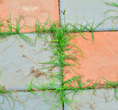 Grass growing on Stock Photography