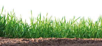 Grass growing on clay Stock Image