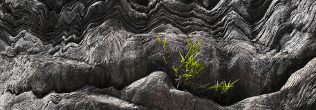 2013 Grass growing from cleft in rock-1 Stock Photos