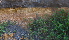 Grass growing close to the soil under the road. Stock Photography