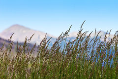 Grass Growing in Colorado Mountains Stock Photography