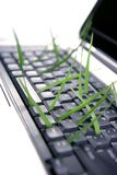Grass growing from computer keyboard, metaphor. Grass growing from computer keyboard, ecology metaphor Royalty Free Stock Images