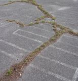 Grass growing in a crack in asphalt. Grass growing in a crack in gray asphalt royalty free stock photo