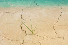 Grass growing through crack with water over come,environment con Royalty Free Stock Images