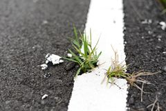 Grass growing cracked asphalt road surface. Nature, Plant, Green, Wall royalty free stock photos