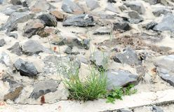 Grass growing cracked asphalt road surface. Nature, Plant, Green, Wall stock image