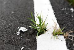 Grass growing cracked asphalt road surface. Nature, Plant, Green, Wall royalty free stock photography