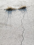 Grass Growing in Cracked Concrete. Royalty Free Stock Image