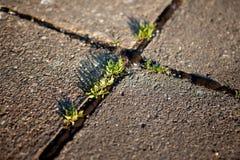 Grass growing in the cracks between garden tiles Stock Photo