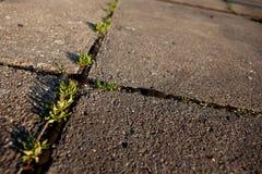 Grass growing in the cracks between garden tiles Royalty Free Stock Photography