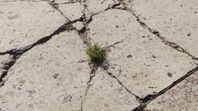 Grass growing in the cracks between garden tiles Royalty Free Stock Image