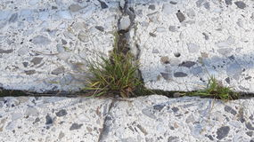 Grass growing in the cracks between garden tiles Stock Photos